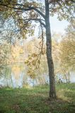 Young oak tree in border river with autumnal Stock Photos
