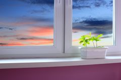 Young oaks on the window-sill and view to the evening sky royalty free stock images