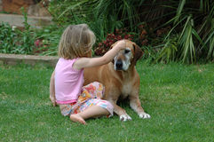 Young and old. A blond young toddler girl playing with her old cute Rhodesian Ridgeback hound dog friend in the garden on the lawn Stock Photos