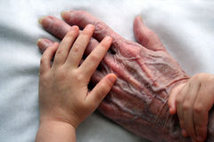 Young and Old Hands. A child lovingly holds her grandmother's hand Stock Images