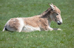 Young Onager sitting in field Royalty Free Stock Images