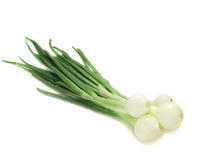 Young Onion Royalty Free Stock Image