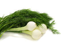 Young onion with dill Royalty Free Stock Photography