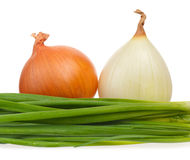 Young onion Royalty Free Stock Images
