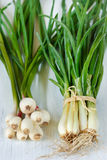 Young onion and garlic. Royalty Free Stock Photos