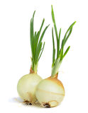 Young onion on white background.  royalty free stock image