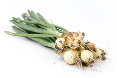 Young onions with soil  over white background Royalty Free Stock Images
