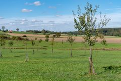 Young orchard meadow in front of blue sky on autumn royalty free stock photography