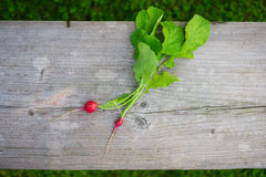 Young organic reddish Stock Image