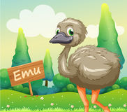 A young ostrich beside a wooden signboard Stock Photos