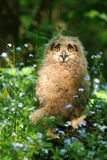 Young owl in flowers Royalty Free Stock Photo