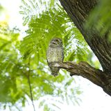 Young owl on green tree Stock Photo