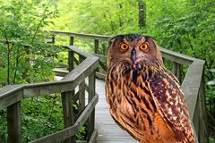 A young owl in a park Stock Photo