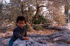 A young Palestinian boy in an olive grove. Stock Images