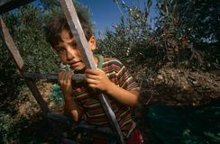 A young Palestinian boy in an olive grove. Stock Photography