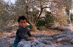 A young Palestinian boy in an olive grove. Stock Photo