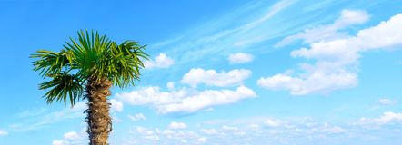 Young palm tree against the cloudly blue sky. Space for text. Vacation at sea. Tropics. Summer rest. Stock Image