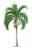 Young palm tree Stock Photos