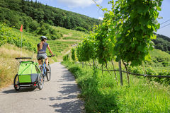 Young Parent Cycling With Bike Trailer. Young parent cycling through vineyards with bike trailer Stock Image