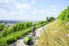 Young Parent Cycling With Bike Trailer. Young parent cycling through vineyards with bike trailer Stock Photos