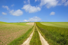 Young pea field and farm track Royalty Free Stock Photography