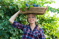 Young peasant woman bringing basket with grapes Stock Photos