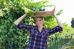 Young peasant woman bringing basket with grapes Stock Images
