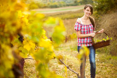 Young peasant woman in the vineyard Royalty Free Stock Image