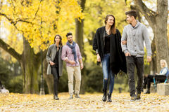 Young people in the autumn park Stock Images