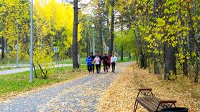 Young people go jogging along yellow birch park track stock video