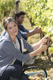 Young people during harvest season in vineyards Royalty Free Stock Photography