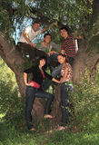 Young people on nature. Company of young people on nature Royalty Free Stock Images