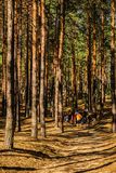Young People Among the Pines. Kyiliv, Kyiv region, Ukraine - 08 09 2017: A group of young people teenagers in a pine forest play rest are competing vertical royalty free stock images