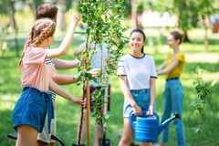 Young people planting new trees and volunteering in park. Together royalty free stock photography