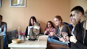 Young people rest in cat cafe stock footage