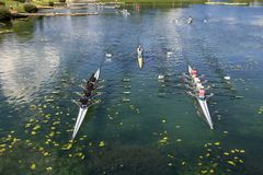 Young people training rowing on the lake Jarun Stock Image