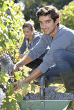 Young people in vineyard Stock Images