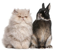 Young Persian cat and rabbit. Sitting in front of white background Stock Photography
