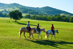 The young person riding horses on the summer meadow. The photo was taken in huamugou national forest park Hexigten banner Chifeng city Nei Monggol Autonomous Stock Photography