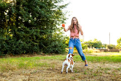 Cute girl is playing with her dog in the park. Young pet dog breeds beagle walking in park outdoors. woman carefully walks puppy, plays and trains, sits with pet stock image