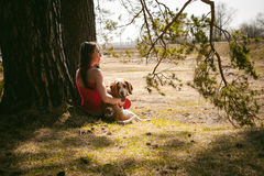 Young pet dog breeds beagle walking in the park outdoors. Young pet dog breeds beagle walking in park outdoors. woman carefully walks puppy, plays and Royalty Free Stock Photo