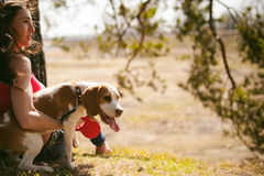 Young pet dog breeds beagle walking in the park outdoors. Young pet dog breeds beagle walking in park outdoors. woman carefully walks puppy, plays and Stock Photography