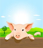 Young pig. On a farm Stock Images