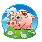 Young pig on the color background stock photo
