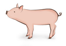 Young pig illustration Stock Images