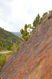 Young pine tree on a rocky mountainside.  royalty free stock photography