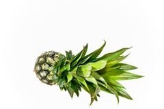 Young pineapple Royalty Free Stock Photography