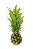 Young pineapple Royalty Free Stock Photos