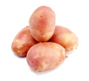 Young pink potato  on a white background Stock Image