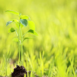 Young plant. Against green nature background royalty free stock photos